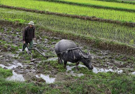 Вьетнам Жители 2