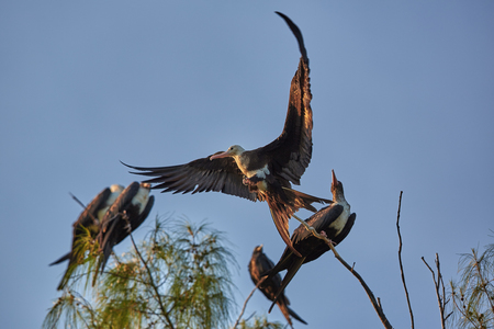 Сейшелы Птицы 4