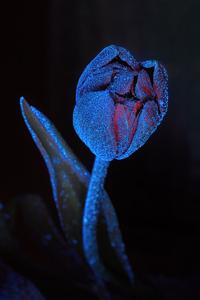 Ультрафиолет 1